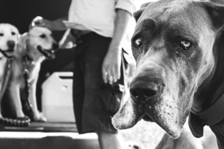 Modul 14 | Tierfotografie